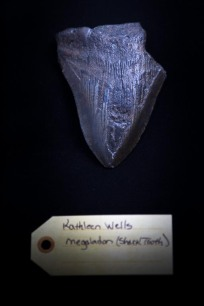 Megalodon (shark tooth)