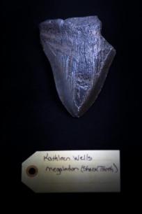Megalodon (shark tooth)