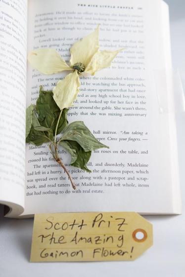 The amazing Gaiman flower!